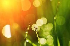Morgen Gras