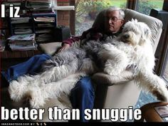 Old English Sheepdog > snuggie Huge Dogs, I Love Dogs, Puppy Love, Lap Dogs, Dogs And Puppies, Doggies, Funny Animals With Captions, Old English Sheepdog, Funny Dog Pictures