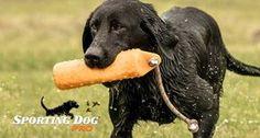 Dog Training Do's and Don'ts