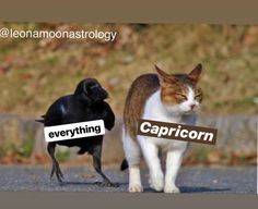 Capricorn And Cancer, Capricorn Traits, Virgo Moon, Zodiac Signs Capricorn, Zodiac Art, My Zodiac Sign, Astrology Zodiac, Zodiac Signs Chart, Zodiac Sign Traits