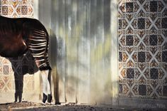 luzia pimpinela | travel | antwerp zoo, belgium