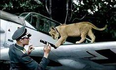 Luftwaffe ace Franz Von Werra with mascot Simba.