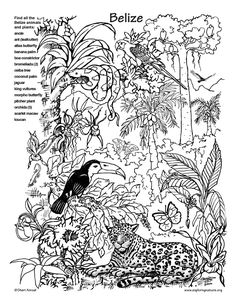 Rainforest colouring page - fantastic site, lots of free ...
