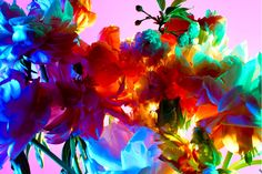 http://trendland.com/wp-content/uploads/2010/09/Torkil-Gudnasons-Floral-Series-3.png