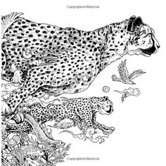Animorphia An Extreme Coloring And Search Challenge Kerby Rosanes 9780147518361 Amazon Books