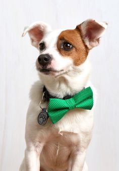 Let's Play Fetching Dog Bow Tie in Green Dots