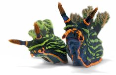 nudibranch  #Allison, ?????  figured you know! ;)