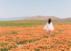 The Antelope Valley in Southern California came alive with vast fields of poppies during the California Superbloom. Read on for more information and photos of this amazing Spring wildflowers phenomenon! Wild Poppies, Wild Flowers, Flowers San Francisco, Poppy Photo, Spring Wildflowers, California Travel, Country Girls, Art Inspo, Monument Valley