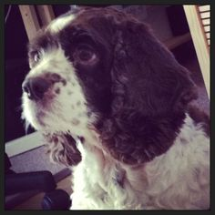 """Yoga for doggies... """"Contemplación de la galleta"""" #dogs #yoga #animals #love #pets"""