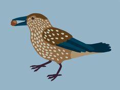 Cassenoix moucheté Illustration, Rooster, Lisa, Animals, Animaux, Illustrations, Animal, Animales, Animais