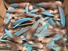 Turquoise Blue Macaw Feathers 12 pcs Parrot Bird RARE!