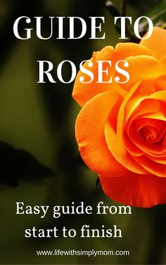 Easy guide designed for beginners. Learn step by step how to plant and care for roses.