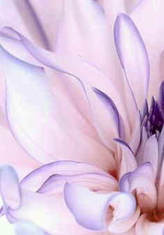 33 Ideas Plants Flowers Photography Purple - i like flowers Blumen flores - Amazing Flowers, Pretty Flowers, Purple Flowers, Bouquet Flowers, Spring Flowers, White Flowers, Macro Photography, Photography Flowers, Photography Classes