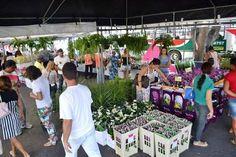 #LEIAMAIS  WWW.OBSERVADORINDEPENDENTE.COM FEIRA DE SANTANA: Feira de Flores no estacionamento da Prefeitura segue até o dia 12