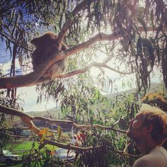 Hi there little fellow! Look who we met on the great ocean road   . #koala #tree #traveling #enjoylife #roadtrip #travel #wanderlust #gumtree #eukalyptus #greatoceanroad #enjoylife #australia #kennettriver #koalas #wildlife #away #ontheroad by justlette