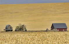 In a Sea of Wheat Photograph