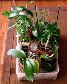 Houseplant Care Guides: Orchid Care 101