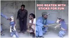 Demand animal protection laws in Pakistan! End the daily suffering of hundreds of dogs!