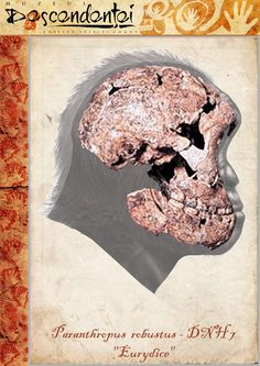 "Paranthropus robustus - DNH 7 - ""Eurydice"" - reconstruction by Eduard Olaru"