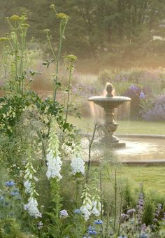 Light on the fountain. Foxgloves and nigella. Angelica? Blues in the background. Lovely.
