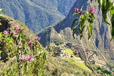 After 2 weeks in Peru, we explored the long-anticipated Machu Picchu Mountain and admire one of the new 7 wonders of the world. Machu Picchu Mountain, Wonders Of The World, Grand Canyon, Explore, Mountains, Nature, Travel, Naturaleza, Viajes