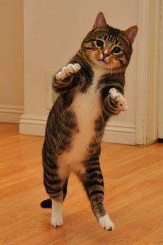"""""""ok it goes like this...put your right paw in...take you right paw out..."""""""