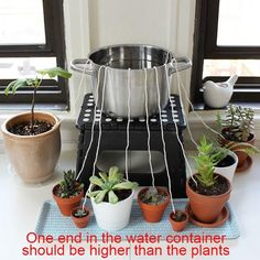 50 Feet Self watering Wick Cord for Vacation Self-watering Planter Pots DIY Automatic Watering Device System Potted Plant Sitter Auto Drip Irrigation Waterer to Water African Violet Cotton String Rope - Plants and garden - Herb Garden, Garden Plants, Patio Plants, Water Garden, Potted Plants, Indoor Plants, Pots For Plants, Hanging Plants, Container Gardening
