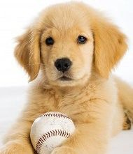 Look so much like Fenway when she was a puppy.    All he needs is a baseball cap