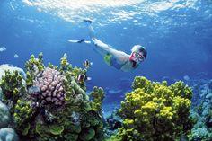 Snorkel / scuba The Great Barrier Reef