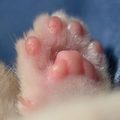 Oh...beyond precious little pink paws :)