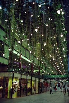 Hanging ivy and lights