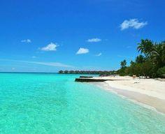 Regram from @beatrix_stellar -  #nature #maldives #sky #sun #summer #beach #beautiful #pretty #sunset #sunrise # https://t.co/WCMgQzdYxg (via Twitter http://twitter.com/maldivesinpics/status/699115352521887744) - http://ift.tt/1HQJd81