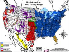 North American Wild Turkey Range - US Map of Species and Subspecies │National Wild Turkey Federation #nwtf #turkeyhunting