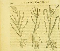 Giambattista delia Porta Phytognomonica ... octo libris contenta... p. 140