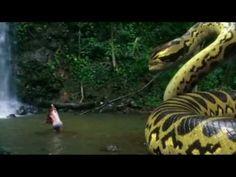 Piranhaconda ano: 2012 realizador: Jim Wynorski