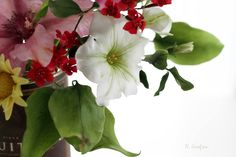 Neli Josefsen - Sugar Flowers