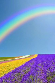 Rainbows and Lavender Fields                                                                                                                                                                                 More
