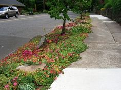 Are you tired of cutting grass in your parking strip? Plantings can change all of that for you and make your landscaping more dramatic. Sidewalk Landscaping, Home Landscaping, Landscaping With Rocks, Front Yard Landscaping, Sidewalk Ideas, Home Design, Landscape Design, Garden Design, Plant Design