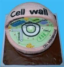 Image result for 3d plant cell model styrofoam ball