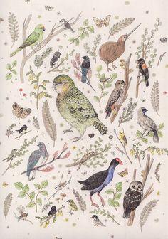 Birds of New Zealand Poster - kiwi, the kea, kakapo, tui, kokako etc. Bird Illustration, Illustrations, Nz Art, Colorful Birds, Exotic Birds, Kiwiana, Bird Art, Botanical Prints, Beautiful Birds