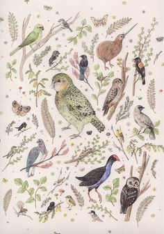 """New Zealand Birds and Animals"" by Sarah McNeil"