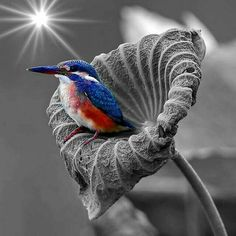 Love this Red,White,and Blue Humming Bird =)