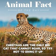 Animal Facts Of The Day With A Funny Twist