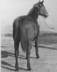 Do Good, although she wasn't much to look at, was a great broodmare and devoted her entire life to her babies. She was inducted into the Hall of Fame in 2008. Learn more about the AQHA Hall of Fame inductees at http://aqha.com/Foundation/Museum/Hall-of-Fame/Hall-of-Fame-Inductees.aspx .