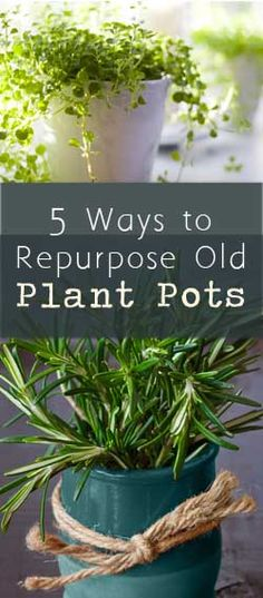 pThere are many ways to repurpose your old plant pots.  Here are some ideas: Garage Organizers - You can use old plant pots in the garage or tool shed to organize hardware items, supplies, and garden tools. If you have old plastic plant pots, you can nail or screw them to the wall /p