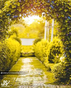 Image may contain: plant, tree and outdoor Photo Background Images Hd, Blur Background Photography, Studio Background Images, Background Images For Editing, Blurred Background, Photo Backgrounds, Hd Background Download, Picsart Background, Beautiful Roads