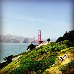 Explore the park near Golden Gate Bridge. Free parking is available at Fort Point or just off Lincoln Blvd. in the Presidio of San Francisco in San Francisco, CA