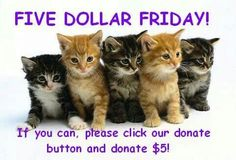 Please donate 5$ to cat house on kings, go on the website to find out more....cathouseonkings.com
