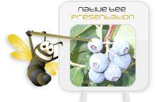 native bee presentation education