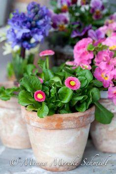 Balkongen blommar | blomsterverkstad